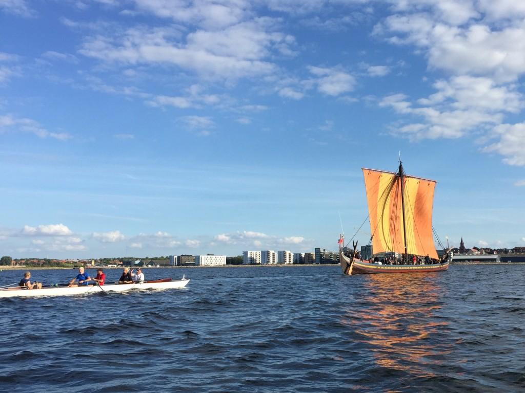 Havhingsted kommer til Holbæk